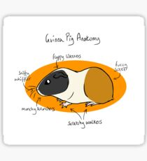 Guinea Pig Anatomy Sticker