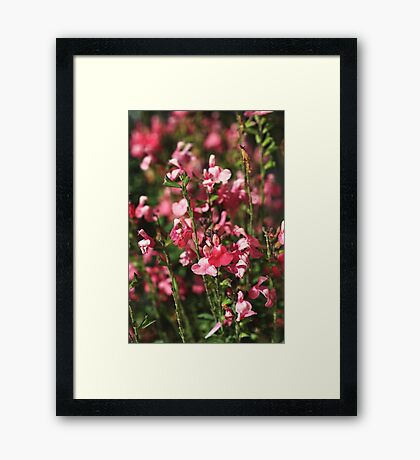 Small And Pink Flowers Sylvia Sage Framed Print