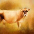 Jersey Cow by Michelle Wrighton