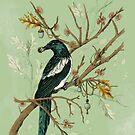 Elster Vögel von lascarlatte