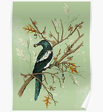 Magpie Birds Poster