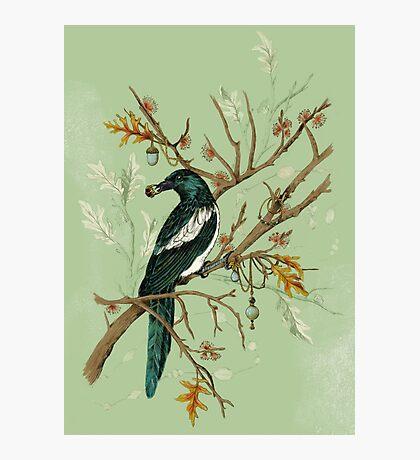 Magpie Birds Photographic Print