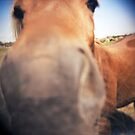 The Nosey Horse by iamsla