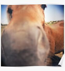 The Nosey Horse Poster