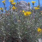 Desert Flowers by route96