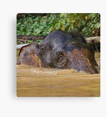 Borneo Pygmy Elephant Canvas Print