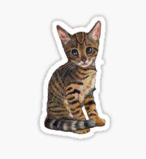 Bengal Kitten Looking Up, Colour Pencil Art Sticker