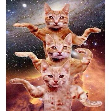 Cats Are Dancing In Space Kitten  by ipan