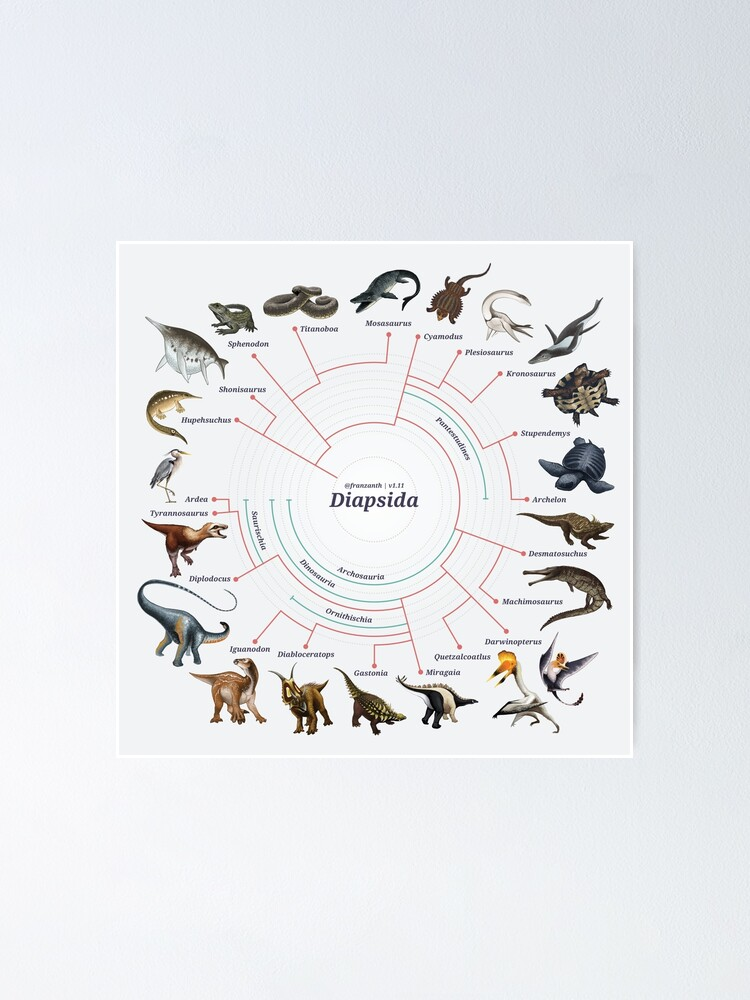 Alternate view of Diapsida: The Cladogram Poster