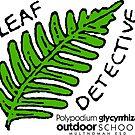 Licorice Fern - Leaf Detective by Multnomah ESD Outdoor School