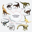 Sauropodomorpha: The Cladogram by Franz Anthony