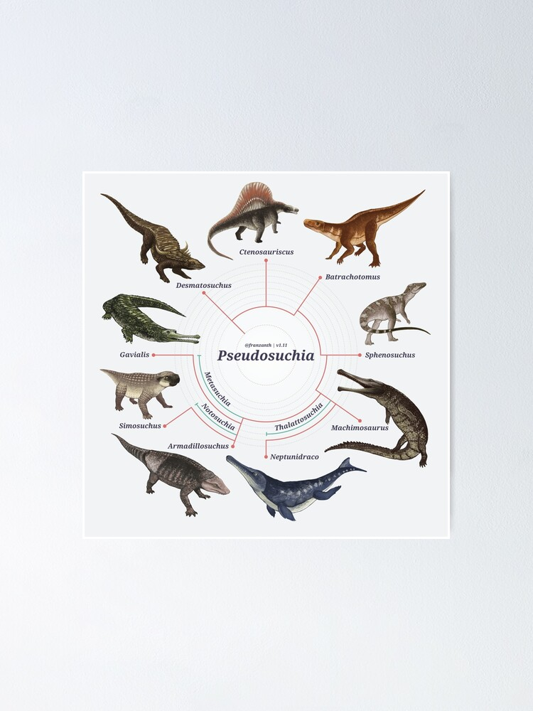 Alternate view of Pseudosuchia: The Cladogram Poster