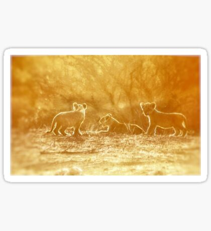 "THE ""THREE"" LITTLE LION CUBS, a Last light capture - THE LION – Panthera leo Sticker"