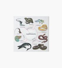 Lepidosauria: The Cladogram Art Board