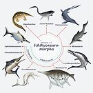 Ichthyosauromorpha: The Cladogram by Franz Anthony