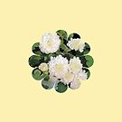 Bunches of white chrysanthemums by Deepthi  Horagoda