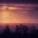 Evening Snowfall by Daniel G.