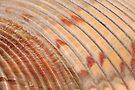 Large Seashell Horizontal by WorldDesign