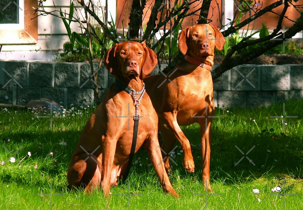 The Neighbor's Duo by Gail Bridger