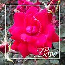 Rose Love by Redhead-K