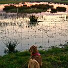 Stockland Marshes  by Debrak2012