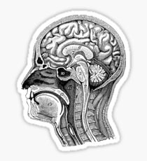 Anatomical Brain Drawing Sticker