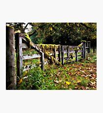 The Mossy Gate - Olympic National Park, Washington Photographic Print