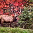 Elk Country Autumn by Kathy Weaver