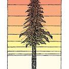 Küsten Redwood Sunset Sketch von Hinterlund