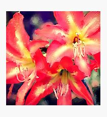 Lily Love Photographic Print