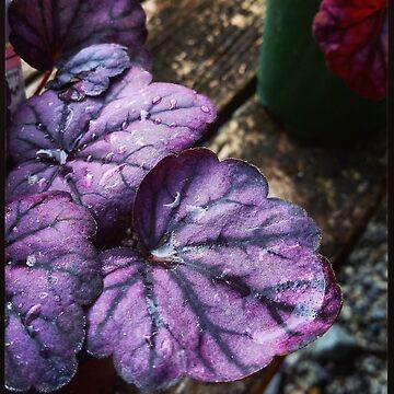Purple Spring by rachelcphotoart