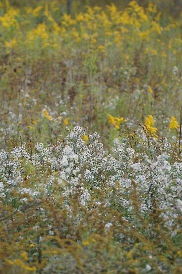 Wildblumen von BenjaminMartin