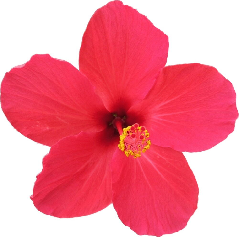 Pretty Little Flower By Theviper Redbubble