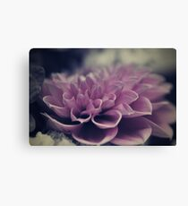 flower close up - seven Canvas Print