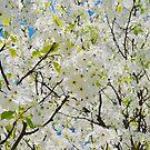 Springtime Canopy by Scott Mitchell