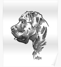 Cane Corso Drawing Poster