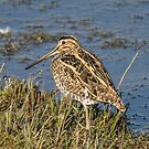Snipe by MikeSquires