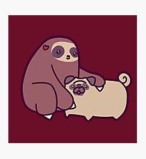 Sloth and Pug Photographic Print