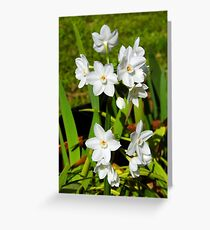 My Amazing Little Paper Whites Greeting Card