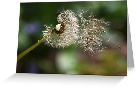 Blowing In the Wind by Kathy Weaver
