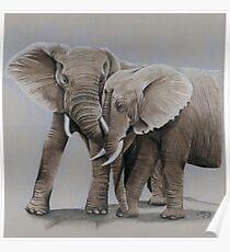 Póster elephant friends