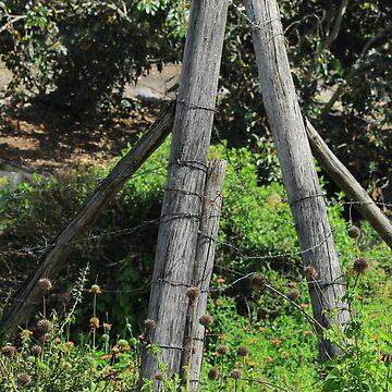 Barb Wire Fence by rhamm