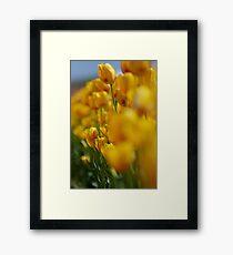 Yellow Tulips Framed Print