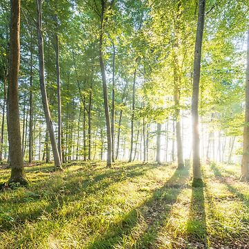The first rays of sunshine in the forest by hannes61