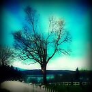 A Tree with a View by EvePenman