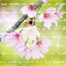 Pale Pink Sakura Cherry Blossoms Antique Handwritten Letter by Beverly Claire Kaiya