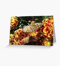 Meadow Argus Butterflies Greeting Card