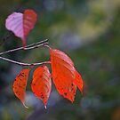 Autumn leaves 2 by eXistenZ