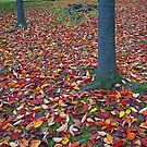 Autumn leaves by eXistenZ