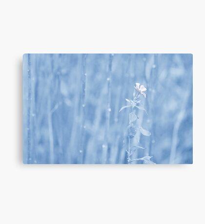 Last Bloom... Canvas Print